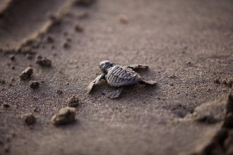 sea-turtle-356125_1920