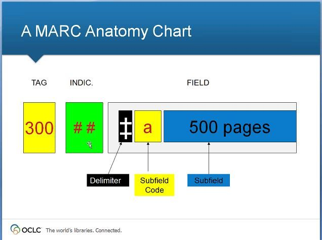 marc anatomy chart